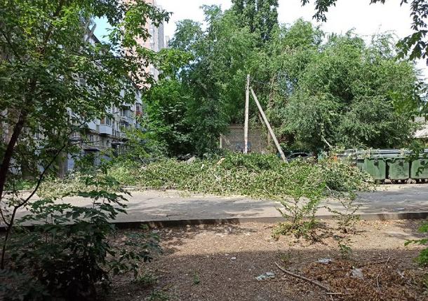 В Октябрьском районе после жалоб будут убраны спиленные деревья